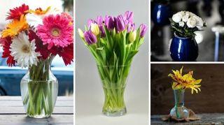 connaissez-vous-la-meilleure-facon-de-conserver-la-fraicheur-des-fleurs
