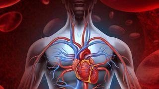 huiles-essentielles-pour-ameliorer-circulation-sanguine