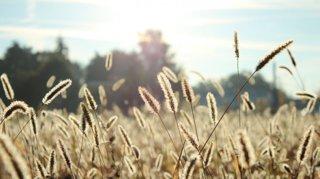 comprendre-eviter-allergies-saisonnieres